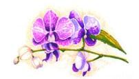 Скетчинг: Растения и Цветы